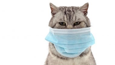COVID-19 Infected Cat, Dog Owners Advised To Avoid Contact With Pets Just Like With Humans