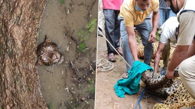 Leopard Falls Into Open Well at Madhab Nagar in Assam, Rescued by Forest Officials