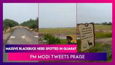 Massive Blackbuck Herd Spotted In Gujarat, PM Narendra Modi Tweets Praise