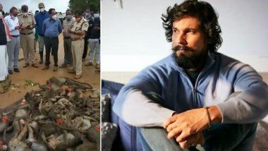 Randeep Hooda Appeals Karnataka CM to Take Action Against Gruesome Murder of 60 Monkeys in State