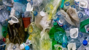 Cow's Stomach Microbes Can Break Down and Digest Plastic, Says Study