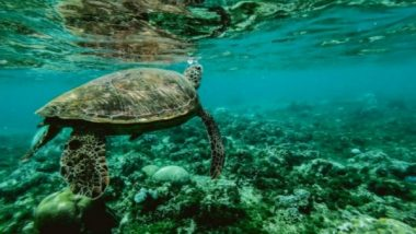 Science News | Tiny Organisms Shed Big Light on Ocean Nutrients: Study