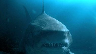 Shark Week 2021: Forget Jaws, 7 Other Shark Movies You Totally Need To Check Out (and Where to Watch Them Online)