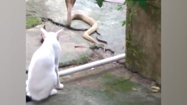 Odisha: Pet Cat Protects Bhubaneswar Family From Cobra, Stands Guard For 30 Minutes (See Pics)