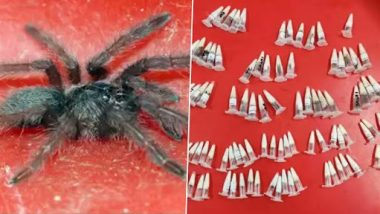 Hundreds of Spiders Found in Small Plastic Vials Inside Air Parcel From Poland, Seized by Customs Officials at Chennai International Airport