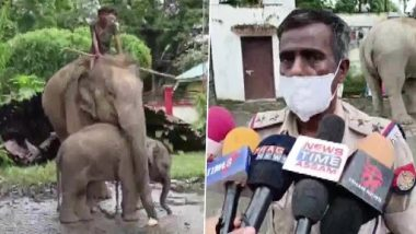 Assam: Female Elephant and Her Calf Taken to Bokakhat Police Station for Allegedly Killing a Boy in Golaghat District (See Pics)