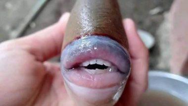 Sheepshead Fish With 'Human' Teeth Caught in North Carolina