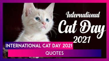 International Cat Day 2021: Quotes, Greetings and Images To Celebrate The Small Furry Mammals