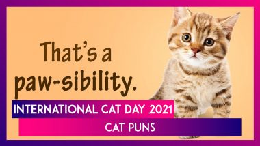 International Cat Day 2021: Funny Cat Puns and Cute Images That're Purr-Fect To Celebrate the Day