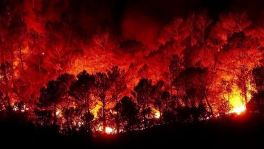 Wildfire Engulfs Power Plant in Turkey, Prompts Urgent Evacuation