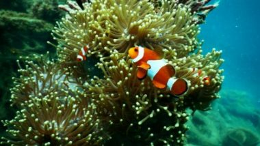 Science News | Corals Survive Heat with Bacterial Help: Study