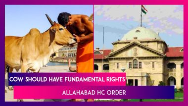 Allahabad HC Order: Cow Is Part Of Indian Culture, Should Have Fundamental Rights