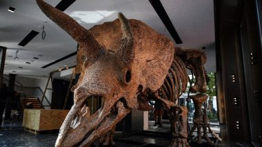 Dinosaur Skeleton of Largest Triceratops 'Big John' Discovered by Paleontologists, Likely To Fetch $1.77 in Paris