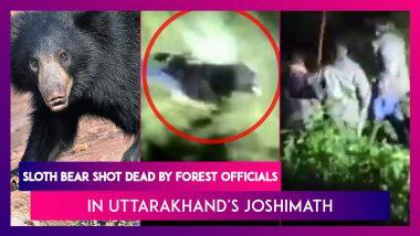 Sloth Bear Shot Dead By Forest Department Officials In Uttarakhand's Joshimath