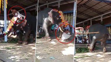 Kerala: Priest Falls As Elephant Goes Berserk at Thiruvilwamala Vilwadrinatha Temple, Watch Video