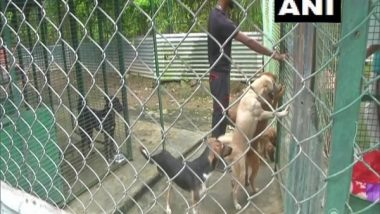 Techie Couple Leave IT Business in US To Help Stray Animals in India