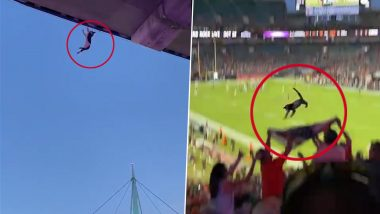 Florida Football Fans Use USA Flag To Rescue Cat Falling From Stands (Watch Video)
