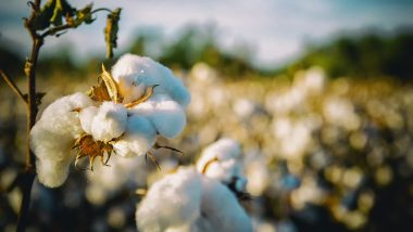 US Ban on Cotton Import From China's Xinjiang Region Provides Opportunities for Indian Cotton Garments: AEPC