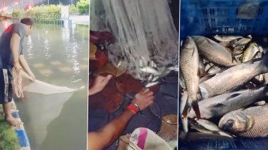 Kolkata Rains: 15 kg Catla Fish Found in Waterlogged Streets of Newtown (Watch Video)