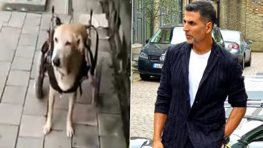 Akshay Kumar Lauds Ayesha Jhulka's Foundation for Helping Out Accident-Met Stray Dog Teddu with a Wheel Chair (Watch Video)