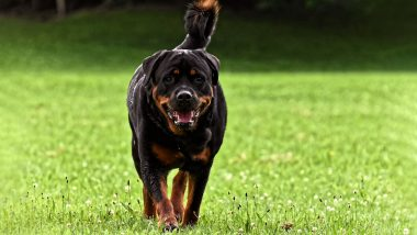 Ireland Bestiality Case: 29-Year-Old Woman, Accused of Having Sex With Rottweiler Dog, Faces Trial in Dublin Court