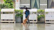 Ratan Tata Shares Picture Of Taj Employee Sharing Umbrella With Stray Dog During Heavy Rainfall in Mumbai, Calls It 'Heartwarming Moment'