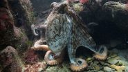 Female Octopuses Throw Rocks, Silt or Shells at Males Who Harass Them and Attempt To Mate With Them, Finds Study