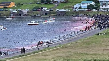 Dolphin Deaths in Faroe Islands: Over 1,400 White-Sided Dolphins Killed During Traditional Whaling Hunt, Netizens Fume Over Barbaric Incident